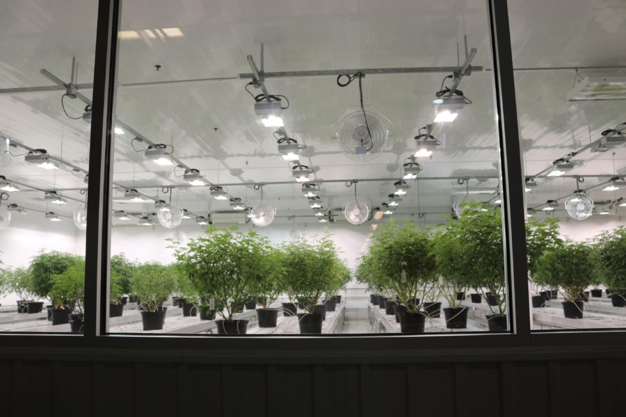 Senators to glean knowledge during tour of cannabis production facility